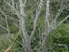 Ein mit Spinneweben überzogener Baum
